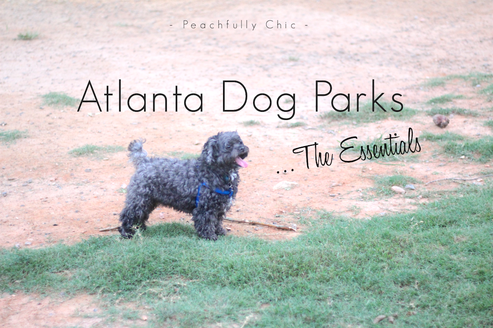 atlanta-dog-park-essentials-main