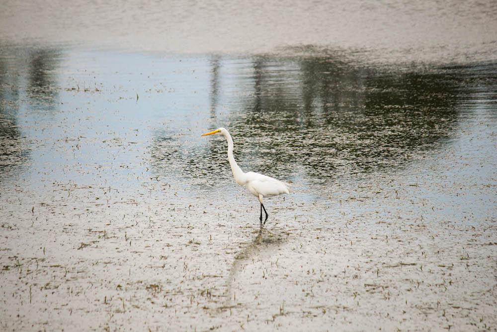 Crane-Shell-Island-Florida-Travel-Blogger