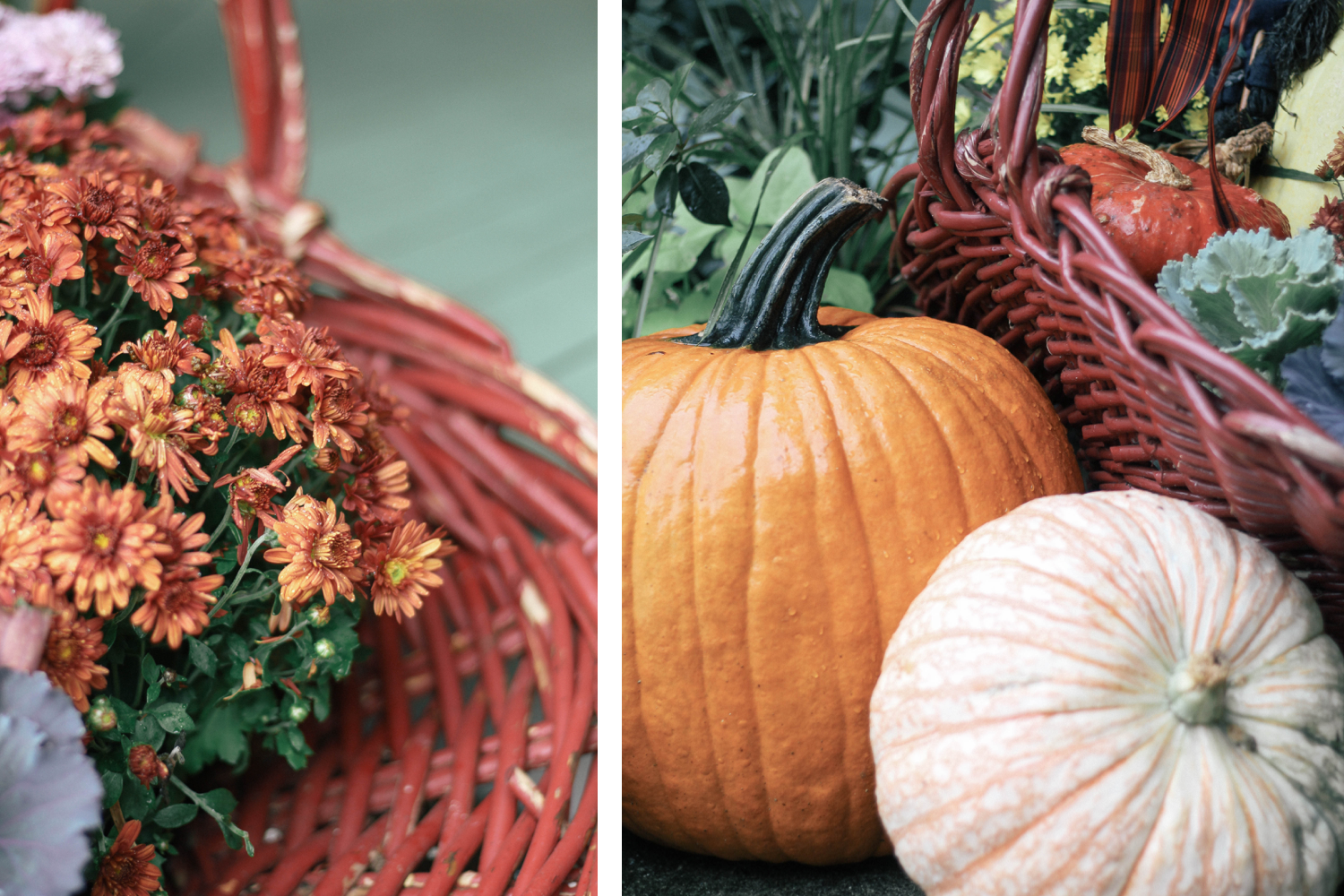 Fall-Decor-Pumpkins-Mums-Cabbage